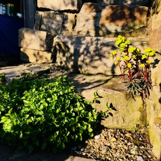 Glockenblumen und Euphorbien