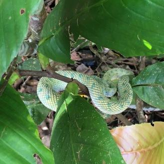 Schlange, grün, ungiftig - war trotzdem froh, dass sie schlief