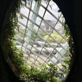 cloud forest VI
